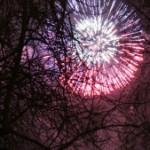 fireworks-behind-tree-1436469-m