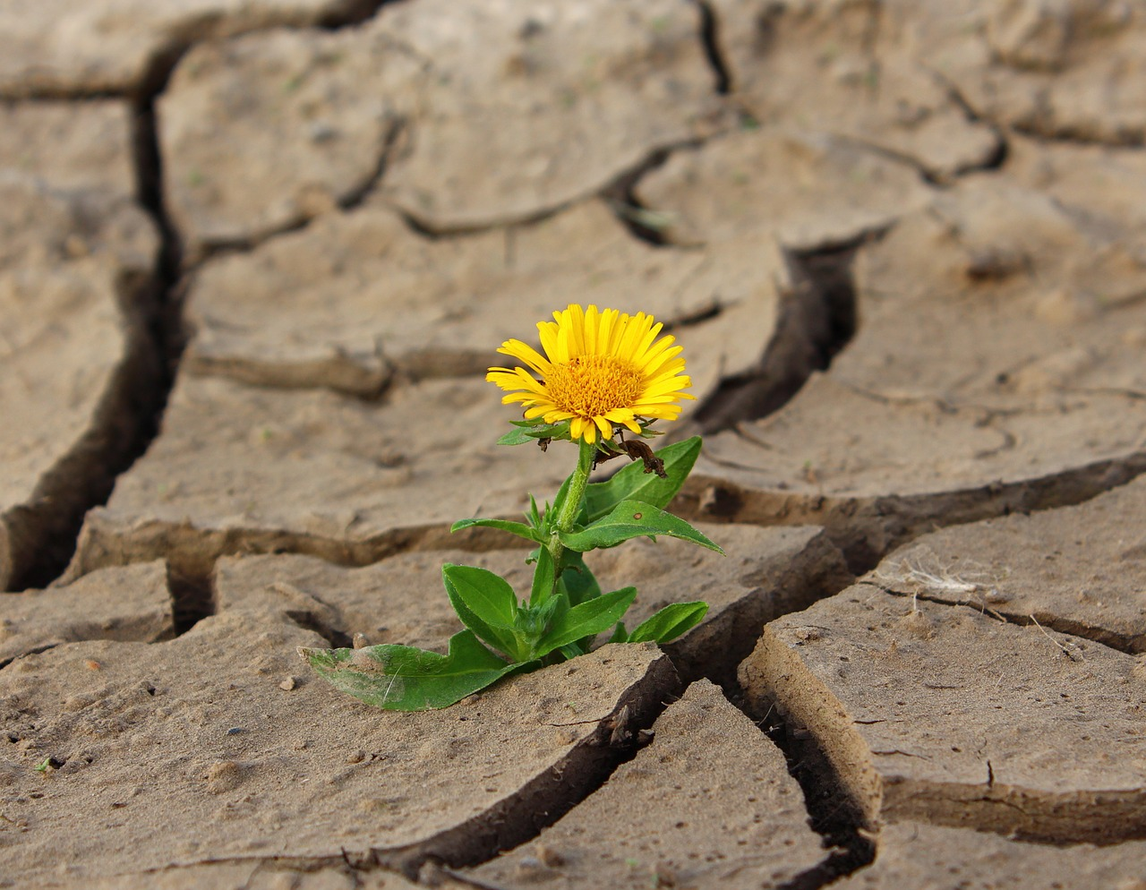 Embracing persistence in children
