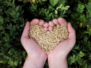 hands-heart-grains